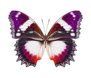 Butterfly purple orange royalty free stock photos