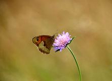 Butterfly on purple wildflower. A close-up about butterfly on grainfield, on a purple wildflower stock photo