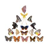 Butterfly pyramid collection Royalty Free Stock Photo