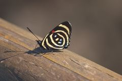 Butterfly on rail Royalty Free Stock Image