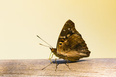 A butterfly on a railing Royalty Free Stock Photo