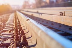 Butterfly on rails in the sun royalty free stock photography