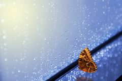 Butterfly and rain for window. In light sun royalty free stock photos