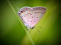 Butterfly  rainbow colour