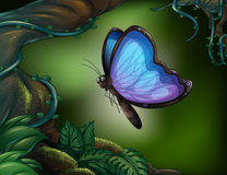 A butterfly in the rainforest Stock Photo