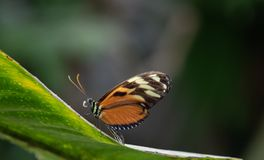 Free Butterfly Rainforest Macro Insect Widlife Stock Photos - 121321133