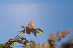 Butterfly with a ray of sun. A butterfly that has landed on tree branch with a ray of sunlight shining directly down on it Royalty Free Stock Image