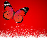 Butterfly on red background Stock Image