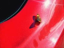 A butterfly on a red car. Nature and technology stock image