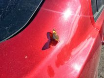 A butterfly on a red car and sun light. A butterfly on a Mitsubishi stock photography