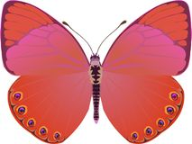 Butterfly red fantasy stock illustration