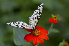 Butterfly on red flower Stock Images