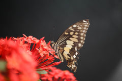 Butterfly on red flower. In the garden Royalty Free Stock Image