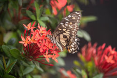 Butterfly on red flower. In the garden Royalty Free Stock Images