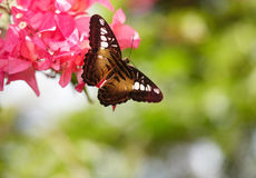 Butterfly and red flower on green background. Royalty Free Stock Image