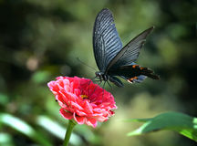 Butterfly. On red flower with green background Royalty Free Stock Photos