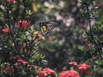 Butterfly on red flower royalty free stock image