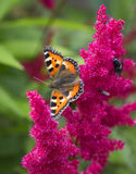 Butterfly on red flower Stock Photography