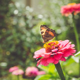 Butterfly on red flower in summer park. Stock Photos
