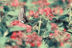 Butterfly on red flowers. Colors butterfly on red flowers in sunny day in autumn stock images