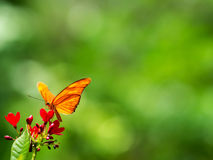 Butterfly on red flowers Stock Photo