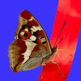 Butterfly on red line. Royalty Free Stock Image