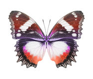 Butterfly red orange Stock Photo