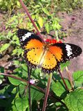 Butterfly. Red orange butterfly wing pattern Royalty Free Stock Photography