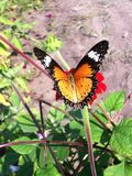 Butterfly. Red orange butterfly wing pattern Stock Photography