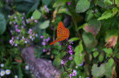 Butterfly with red wings in black speck sitting. On a green plant stock image