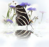 Butterfly With Reflection Royalty Free Stock Photos