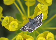 Butterfly relaxing Stock Photos