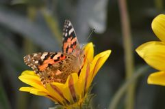 A butterfly rest on flower royalty free stock photography