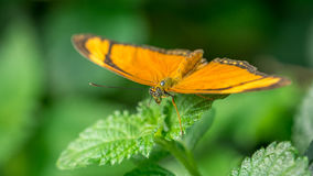 Butterfly at rest Stock Image