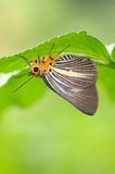 Butterfly rest under a leaf Royalty Free Stock Photography