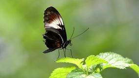 Butterfly resting stock video footage