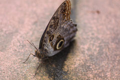 Butterfly resting Royalty Free Stock Images