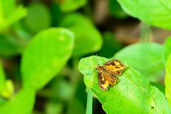 Butterfly resting comfortably on the grass. Stock Photos