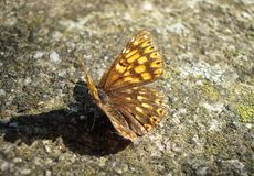 Butterfly resting on concrete flor. Yellow and brown butterfly resting on the concrete floor taking the sun stock image