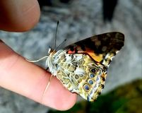 Butterfly. Resting on a finger Stock Photo
