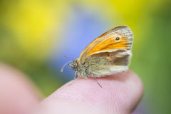 Butterfly resting on a finger Stock Photo