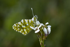 Butterfly resting on a flower Stock Image