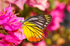 A butterfly resting on  flower Stock Image
