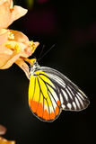 A butterfly resting on  flower Stock Photography