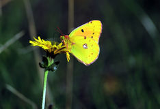 Butterfly resting on a flower stock photo