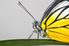 A butterfly resting on green leaf Stock Photography