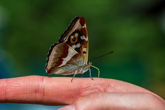 Butterfly resting on human hand in summer sun. With blur background royalty free stock images
