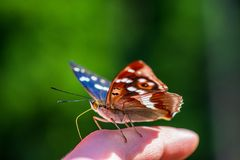Butterfly resting on human hand in summer sun. With blur background stock images