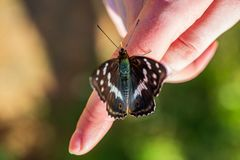 Butterfly resting on human hand in summer sun. With blur background stock photography