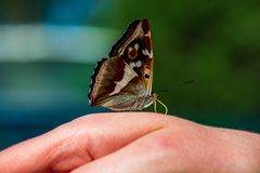 Butterfly resting on human hand in summer sun. With blur background royalty free stock image